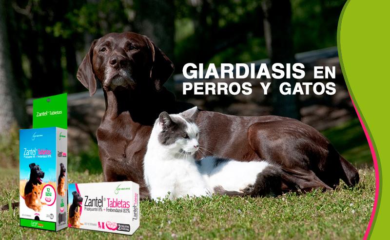 Giardiasis en perros y gatos
